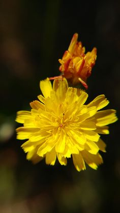 Macro Lens Photography, Fotografia Macro, Plants, Plant, Planting, Planets