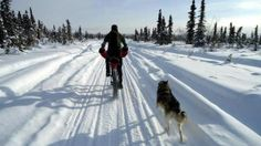 Bike shop owner Kevin Breitenbach rides a fat bike in the White Mountains National Recreation Area in Alaska in March. #fatbike #bicycle