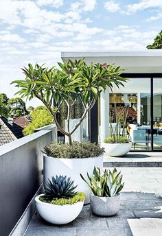 Garden Design Modern planting and sharp lines give this rooftop terrace and garden a contemporary appeal. - Modern planting and sharp lines give this rooftop terrace and garden a contemporary appeal. Outdoor Plants, Outdoor Gardens, Rooftop Gardens, Plants In Pots, Balcony Plants, Balcony Gardening, Trees In Pots, Potted Plants Patio, Pool Plants