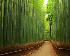 竹林の写真。 あたり一面竹にかこまれたこの小道は、異世界に迷い込んだようで神秘的。