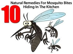 10 Natural Remedies For Mosquito Bites Hiding In The Kitchen