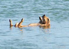 The backstroke, Wiener-style!