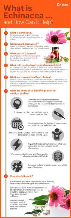 Echinacea infographic
