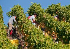 Daley - the oldest wine cellar from Switzerland Switzerland, Old Things, Germany, Wine Cellars, Italy, Plants, Italia, Deutsch, Wine Fridge