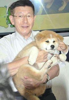 プーチンさんちの子になります…秋田犬「ゆめ」