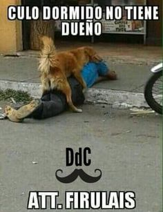 I guess no more caretillas. Now are the perros. So guys watch out lmao Funny Images, Funny Photos, Funniest Photos, Wtf Funny, Hilarious, Funny Shit, Funny Stuff, Mexican Memes, Humor Mexicano