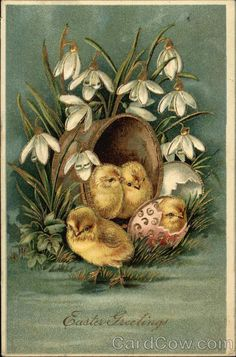 Easter Greetings - Chicks and Snowdrops With Chicks