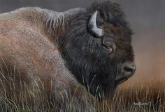American #Bison Print by artist Kevin Daniel