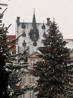 christmas, snow, and christmas tree-bilde