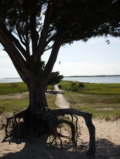 Here Is One Of My Tree Pictures I Have Taken In The Past Few Years