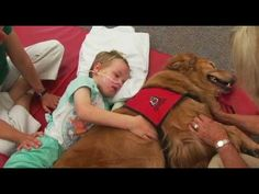 An Amazing Change Happens To This Boy After He Meets His Therapy Dog!