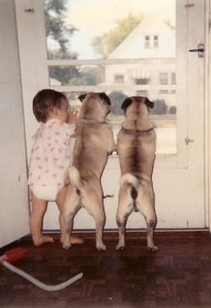 2 pugs and a baby
