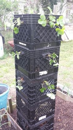 My strawberry tower made of milk crates. 2015