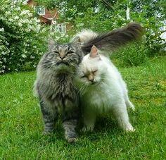 ~♥~@one_bad_cat1★............Amore mioAaaaooww