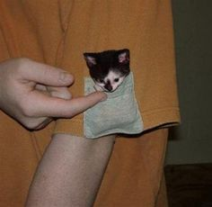 smallest cat breed in the world | Cute Cats Pictures