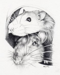 Gem Davis: Drawing Rats