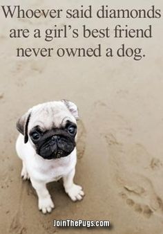 so true. i love my dog more than anything :)