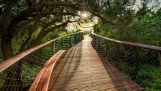Sure, you could take a regular walk in the woods, but why would you do that when you could walk ABOVE the trees? The Kirstenbosch Centenary Tree Canopy Walkway in Cape Town is a raised walkway that lets visitors see the forest and the trees the way a bird or a monkey might.