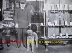 Department Store Police Dog / Airedale Terrier c. 1913