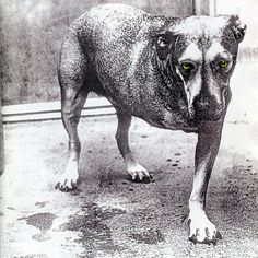 Alice In Chains - Alice In Chains (1995)? I think a picture says a lot, right?