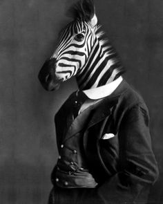 The Most Dapper Animals You've Ever Seen
