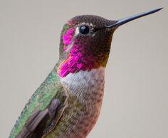 Woman Captures Stunning Photos Of Hummingbirds In Her Backyard