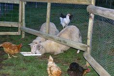 Eco-Gites of Lenault: Animal Tales 1