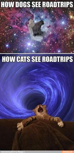 Animals and roadtrips / iFunny :)