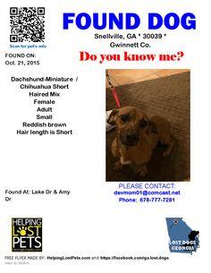 Found Dog - Dachshund-Miniature  - Snellville, GA, United States