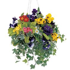 Latest Free of Charge winter Hanging Baskets Strategies Hanging baskets are usually a perfect way to make coloration as well as episode to a sunny retaining wall and .