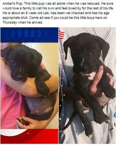 #adoptdontshop #puppies #puppylove #savealife #dogs #animalrescue #animalshelter #dogsareawesome #doglovers #adirondacksaveastray