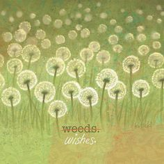 Weed or Wishes by Jason Kotecki. Sometimes a change of perspective changes everything.