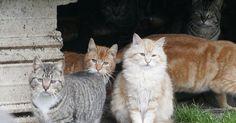 La colère des amoureux des animaux, qu'ils soient des anonymes ou qu'ils s'appellent Brigitte Bardot, n'aura pas raison du projet de l'Australie visant à exterminer quelque 2 millions de chats.La commissaire aux espèces menacées Gregory Andrewsa envoyé une lettre à ...