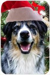 """Australian Shepherd Blue Merle Tempered Cutting Board Christmas by Doggie of the Day. $29.99. Dishwasher Safe. 11.8"""" x 7.87"""" x 5/32"""". Durable. Please allow 4 days to ship. Spice up your kitchen with a fabulous cutting board! These cutting boards are perfect for home chef's and restaurant owner's alike. This is a specially coated glass cutting board that is durable and dishwasher-safe."""
