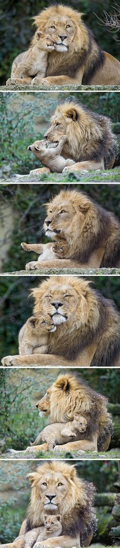 Father and Son (Pictures by Tambako the Jaguar, via Flickr)