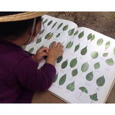 『木の本』