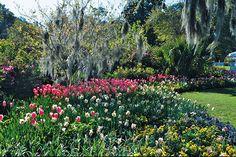 Garden 13: Airlie Gardens @ 300 Airlie Rd. #Airlie #AirlieGardens #Bloom #gardens #nhc #ilm #nature #flowers #CapeFearGardenClub