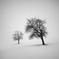 Hasselblad, digital back. In Nature, Vegetal, Tree, forest. The Melancholy Of Winter, photography by Pierre Pellegrini.