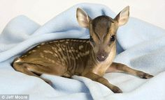 Baby Deer posted by ASPCA on Twitter - follow them!
