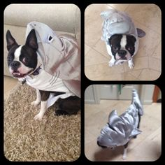 Boston Terrier Costume - Shark