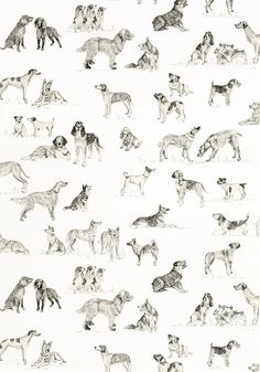Best Friend Wallpaper from Thibaut Menswear Resource Collection. A delightful wallpaper featuring charcoal sketched dogs on white. Best Friend Wallpaper, Pub Decor, Charcoal Sketch, Dog Rooms, Dog Wallpaper, Fashion Wallpaper, Designer Wallpaper, Fur Babies, Camel