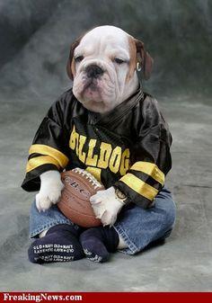 bulldog fan