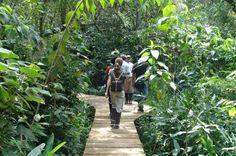 Pedaço preservado da Mata Atlântica no Paraná é reduto de pesquisa e de ecoturismo. A Área de Proteção Ambiental de Guaraqueçaba concentra o maior remanescente contínuo de floresta atlântica do Brasil