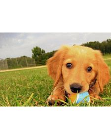Puppy Training Tips - Martha Stewart Pets: i will get a puppy with the future husband