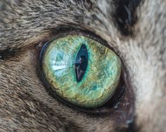 Getting a crisp macro shot of cats' eyes and tongues is simultaneously one of the most frustrating and rewarding things I do. Check out articles about my macro photography here and here .