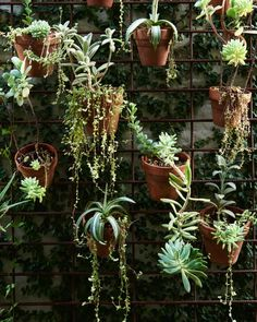 When you run out of space on the ground, the only place is up! A lovely, simple green wall allows the pair to fit even MORE plants into their tiny garden. Photo – Eve Wilson for The Design Files. The Design Files, Design Blog, Little Gardens, Small Gardens, Outdoor Plants, Outdoor Gardens, Plant Design, Garden Design, Cactus Plante
