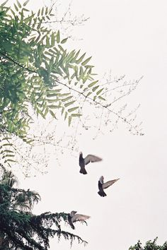 by rafa castells, via Flickr