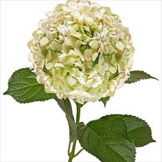 You can buy your flowers in bulk from Sam's Club. Hydrangeas and baby's breath will be your beast friend because they are beautiful, big, and inexpensive. You can then splurge on the perfect roses,orchids, tulips, peonies, sunflowers, etc. to sprinkle throughout bouquets and centerpieces.
