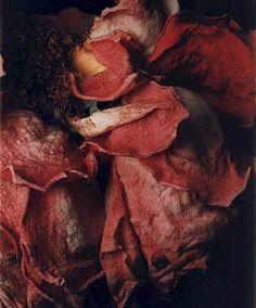Christine Enos, Flowers series