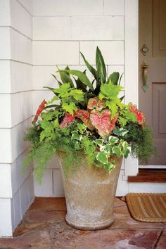 Container Gardening Ideas Shade pot: 'Wasabi' coleus Cast-iron plant 'Pink Beauty' caladium Variegated Algerian ivy Asparagus fern - This shade-loving combo adds color to any entry Porch Plants, Outdoor Plants, Planters Shade, Planters For Front Porch, Flower Planters, Front Porch Flowers, Outdoor Flower Pots, Front Door Plants, Patio Planters
